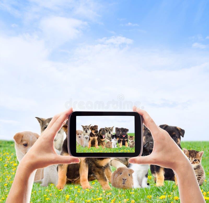 Animais de estimação do grupo fotografia de stock royalty free