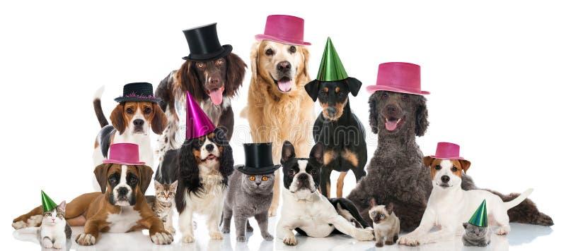 Animais de estimação do partido foto de stock royalty free
