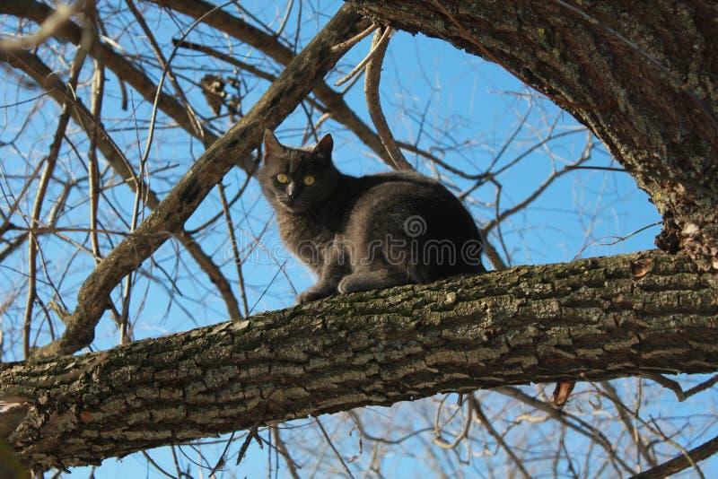 Animais de estimação, gato cinzento, céu azul, animais, sob o céu aberto imagem de stock