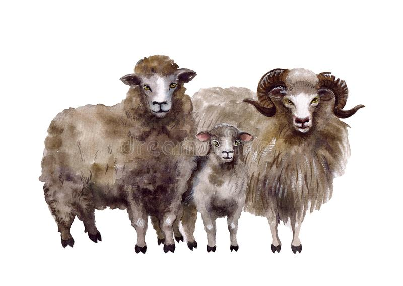 Animais de exploração agrícola bonitos da aquarela Ilustrações dos carneiros ilustração royalty free