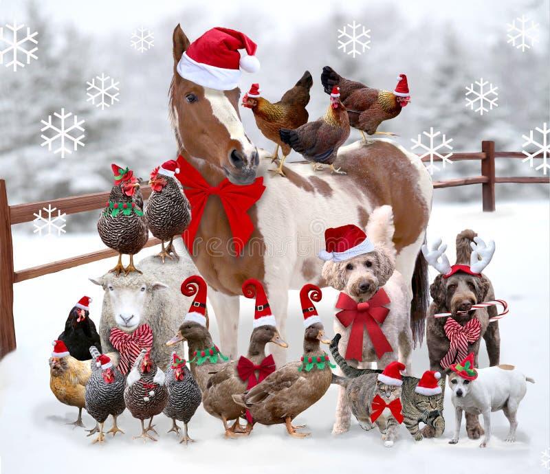Animais de exploração agrícola e animais de estimação que estão vestidos junto para o Natal foto de stock