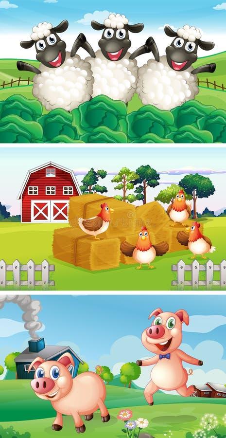 Animais de exploração agrícola que vivem no pátio ilustração stock