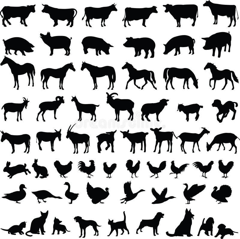Animais de exploração agrícola - vetor ilustração royalty free