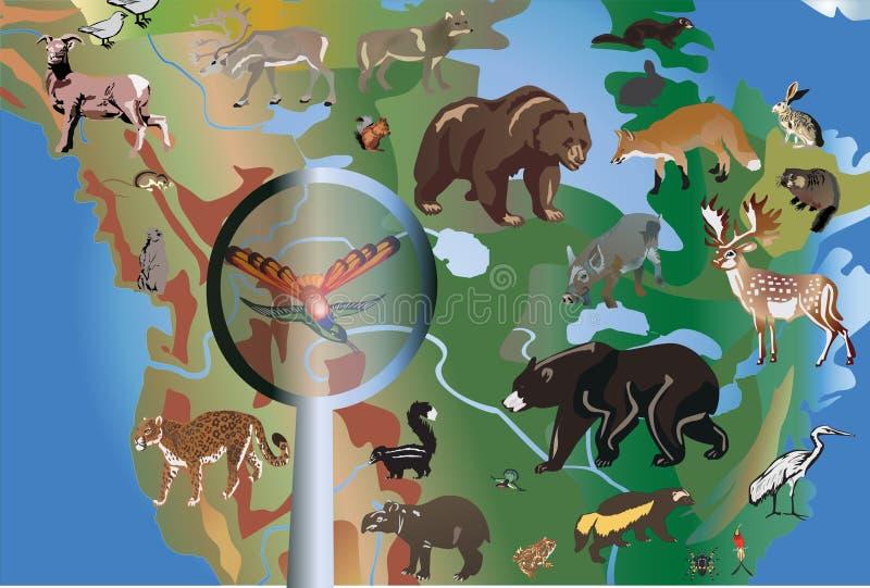 Animais diferentes em America do Norte ilustração do vetor