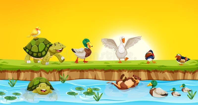 Animais diferentes na cena da lagoa ilustração stock