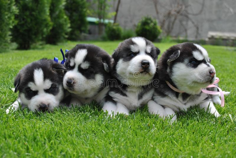 Animais do cão imagem de stock