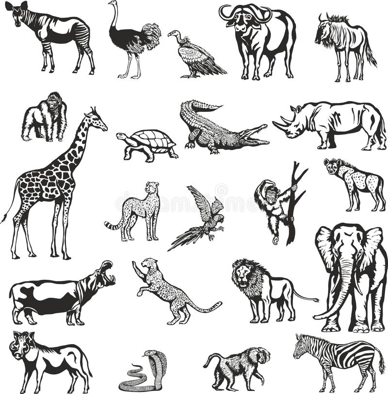 Animais do continente africano ilustração royalty free