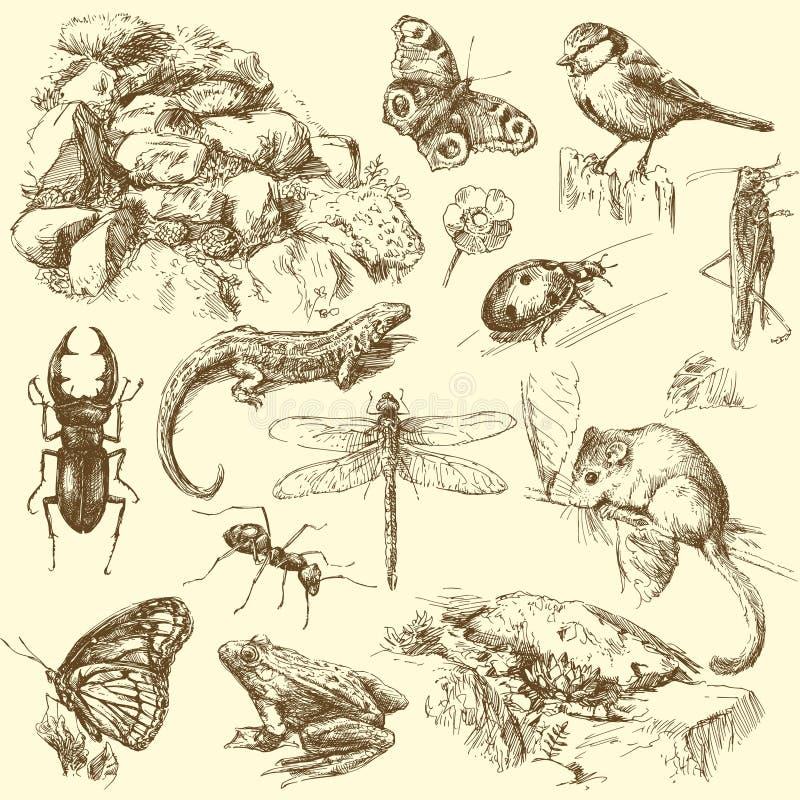 Animais do jardim ilustração royalty free
