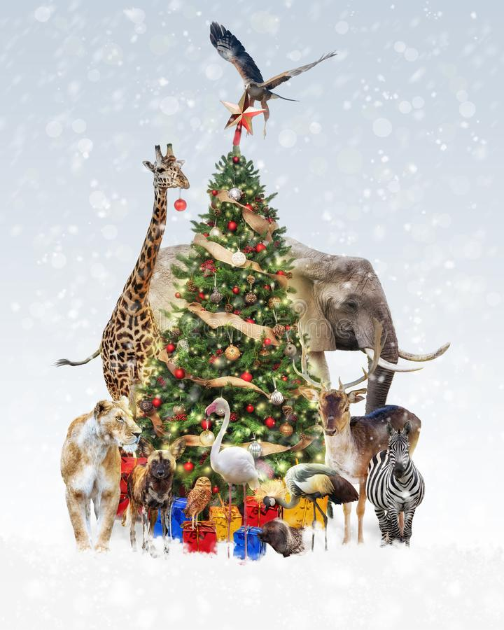 Animais do jardim zoológico que decoram a árvore de Natal na neve fotografia de stock royalty free