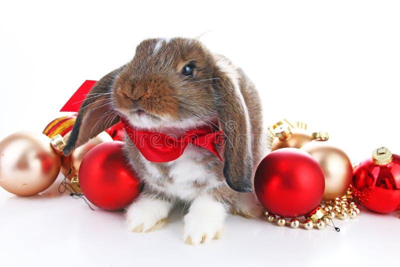 Animais do Natal Coelho bonito do Natal O coelho do coelho poda comemora o Natal com os ornamento da quinquilharia do xmas no iso imagem de stock