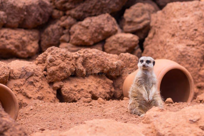 Animais do parque dos oásis, Fuerteventura, Espanha imagem de stock royalty free