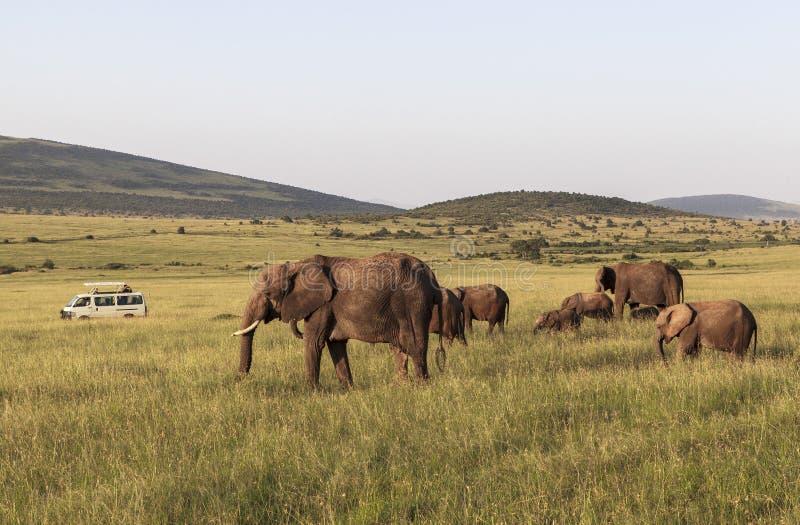 Animais em Maasai Mara, Kenya imagens de stock royalty free