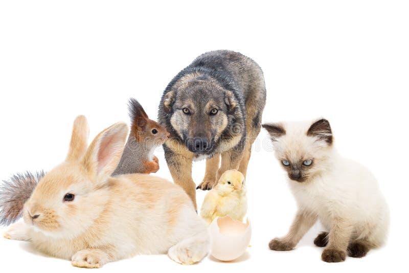 Animais em um fundo branco fotografia de stock royalty free