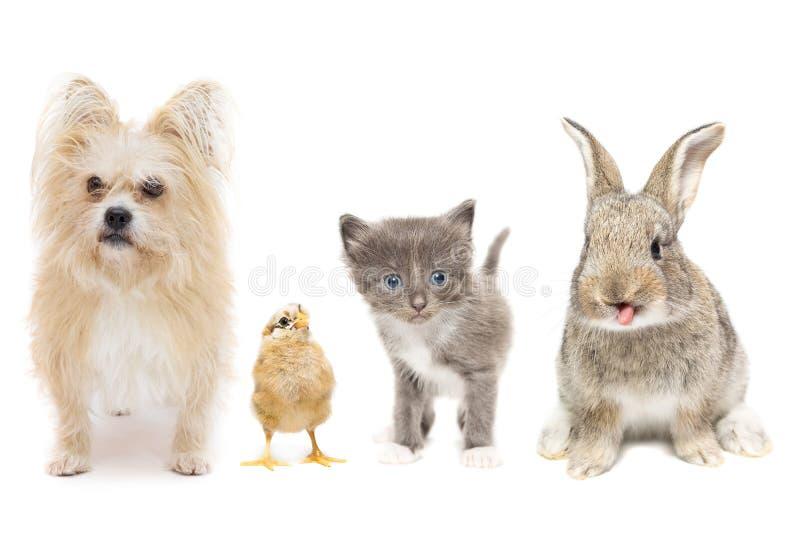 Animais em um fundo branco imagens de stock royalty free