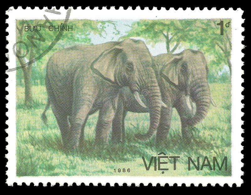 Animais, mamíferos, elefante asiático foto de stock