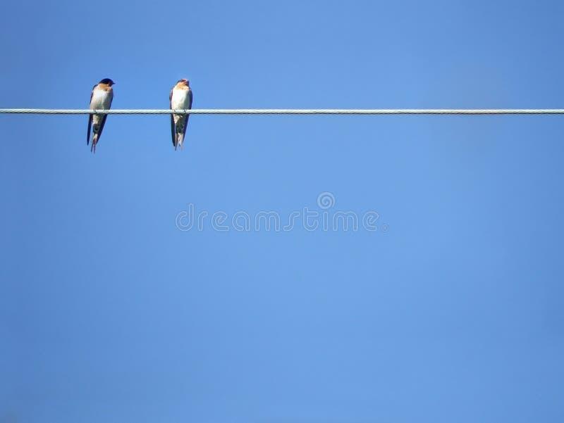 Animais - pássaros fotos de stock royalty free