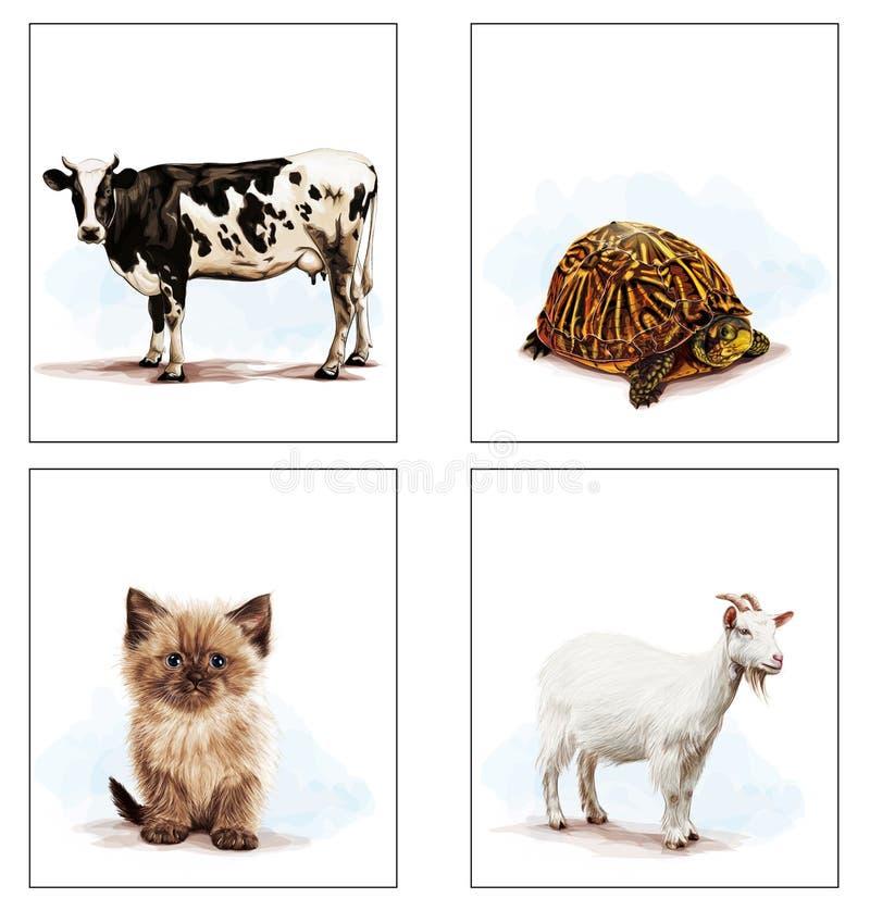 Animais que vivem em casa, gato, cabra, tartaruga, vaca fotografia de stock royalty free