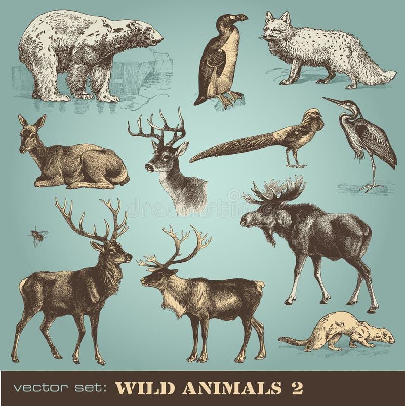 Animais selvagens 2 ilustração royalty free