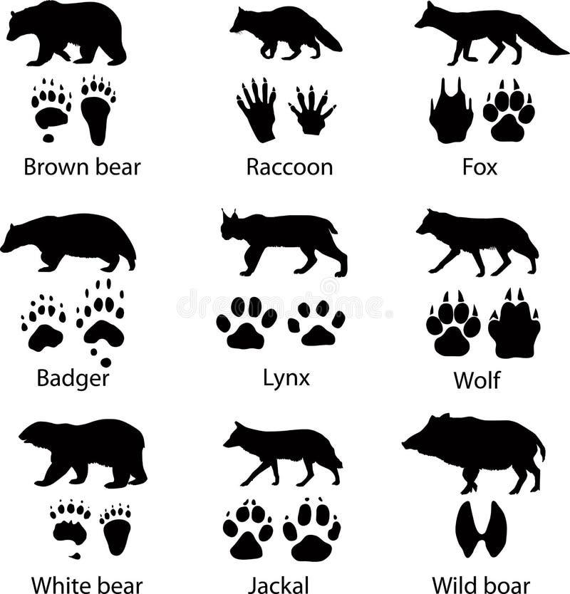 Animais selvagens ilustração royalty free