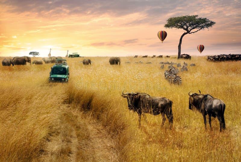 Animais selvagens africanos sonhadores Safari Scene imagem de stock