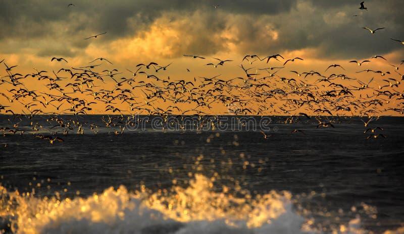 Animais selvagens dos pássaros foto de stock royalty free