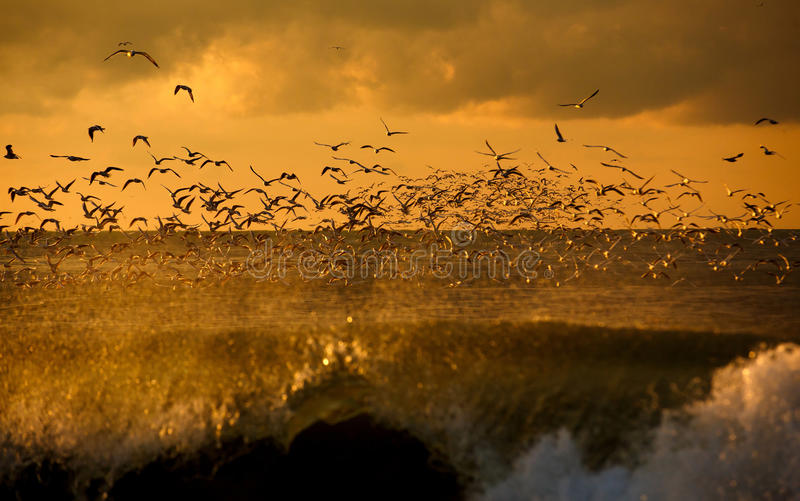 Animais selvagens dos pássaros imagem de stock