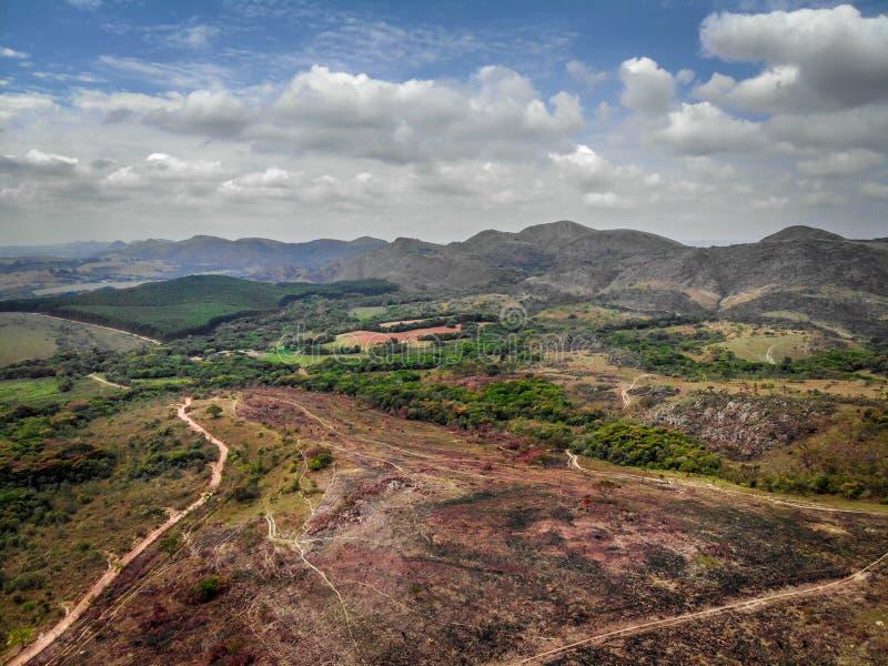 Animais selvagens e natureza em Lavras, Brasil fotos de stock