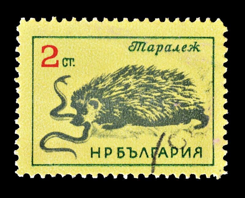 Animais selvagens em selos postais fotografia de stock royalty free