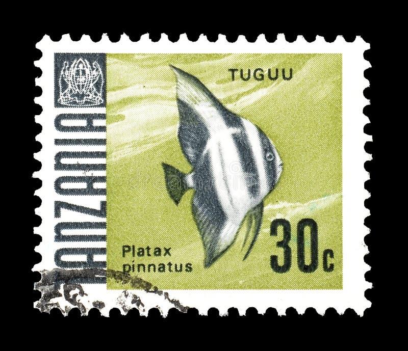 Animais selvagens em selos postais fotos de stock