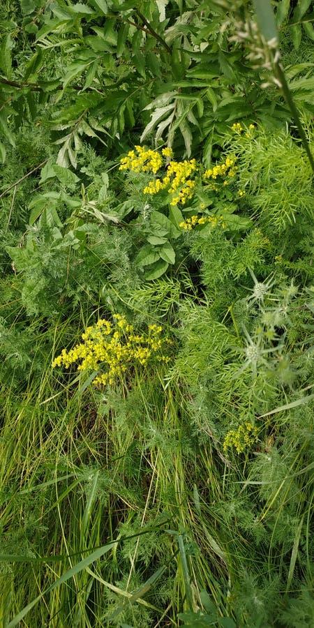 Animais selvagens, grama e flores bonitos fotos de stock