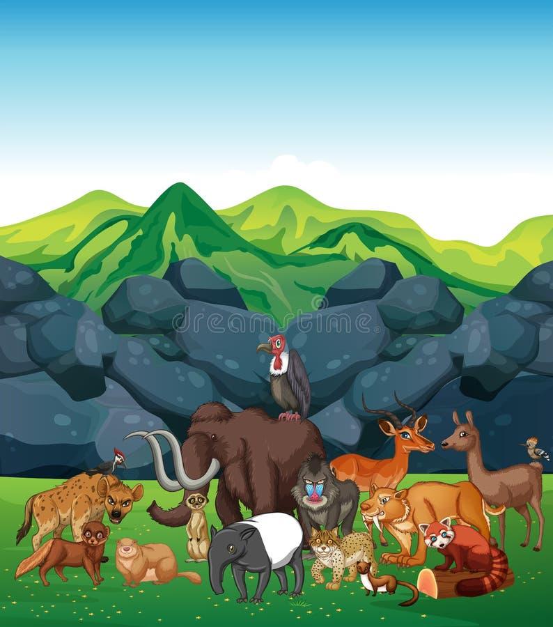 Animais selvagens no campo ilustração stock