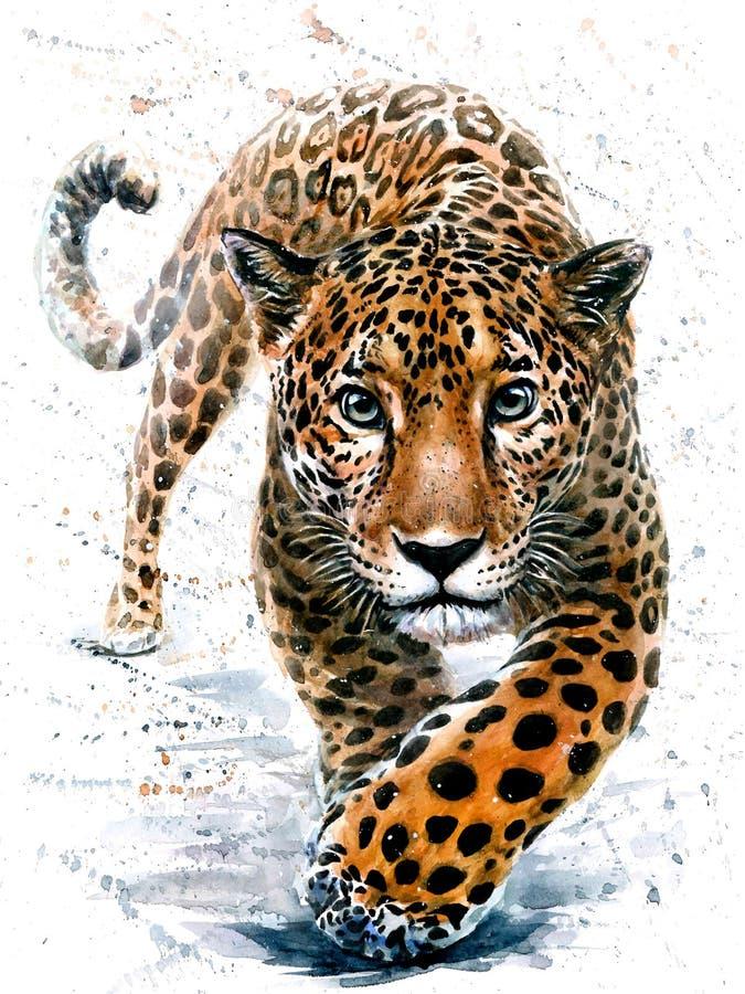Animais selvagens predadores dos animais da aquarela de Jaguar imagens de stock