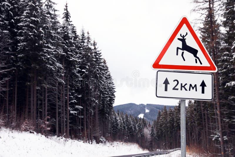 Animais selvagens que advertem o sinal de tráfego perto da estrada com neve em lados fotos de stock royalty free