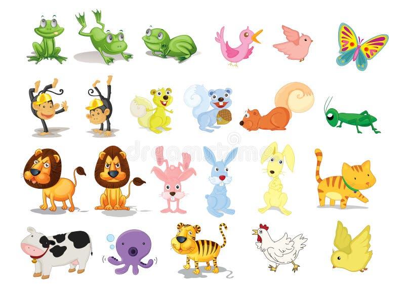 Animal stock photos