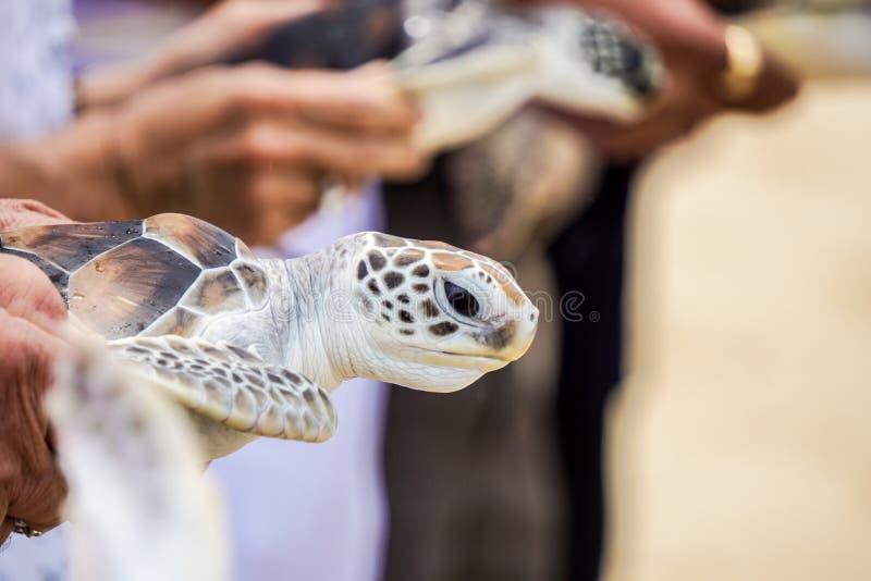 Animal photographie stock libre de droits