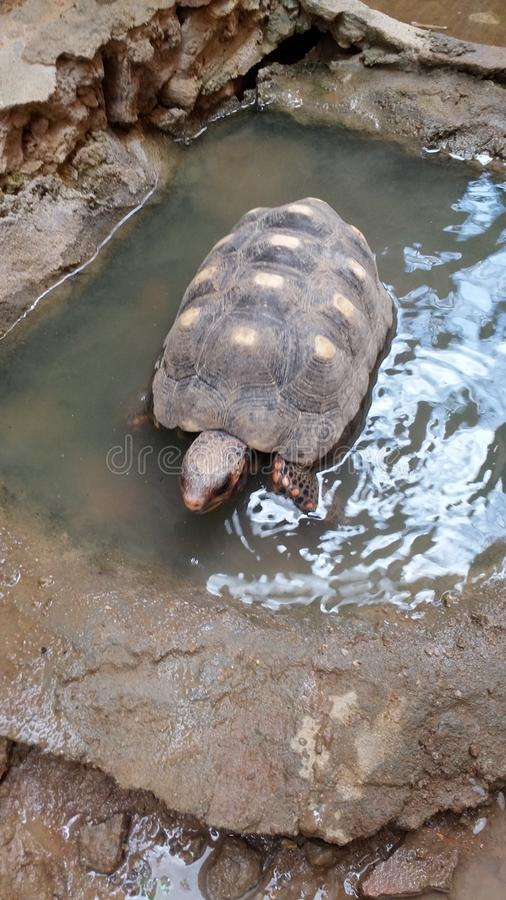animal fotografia de stock royalty free