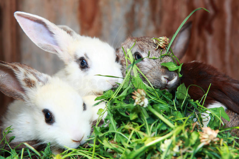 Download Bunny Stock Images - Image: 20434564