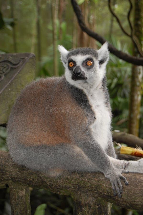Animal imagem de stock royalty free