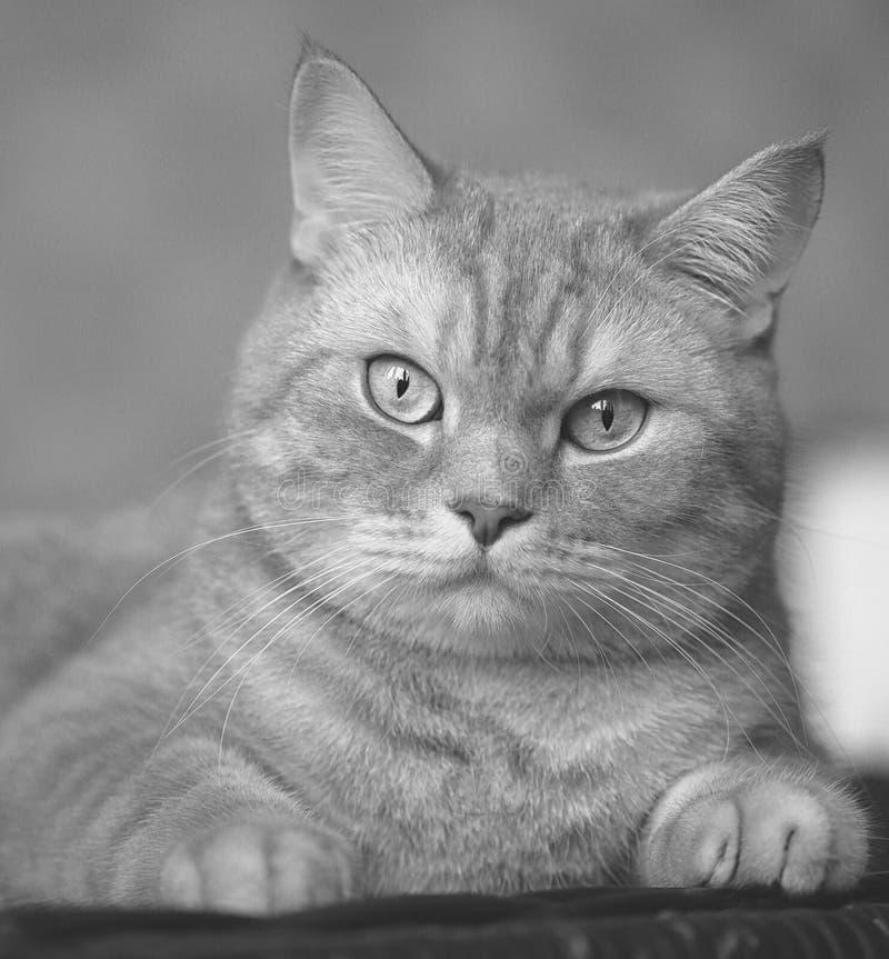 Animal imagen de archivo libre de regalías
