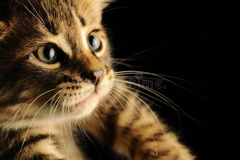 Animal fotos de archivo