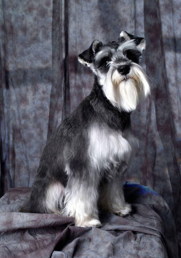 animal foto de stock royalty free