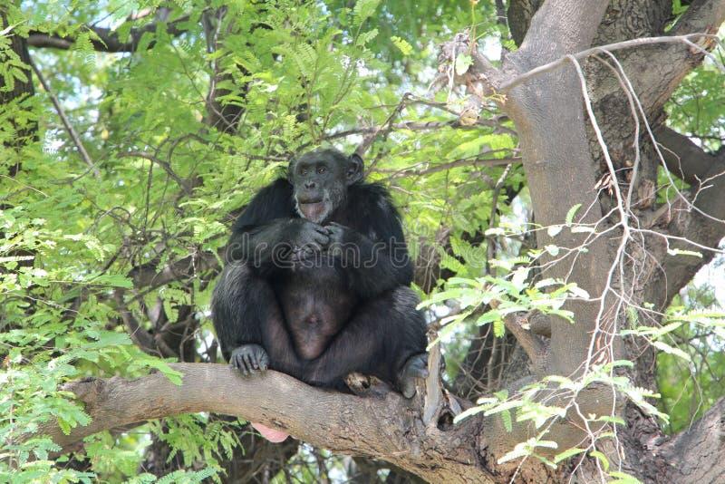 Animal fotografía de archivo libre de regalías
