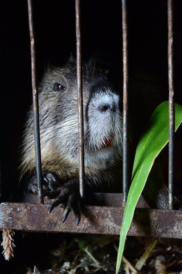 Animal photos libres de droits