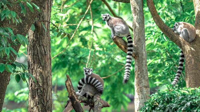 Animal adorable de faune de singe-?cureuil image stock