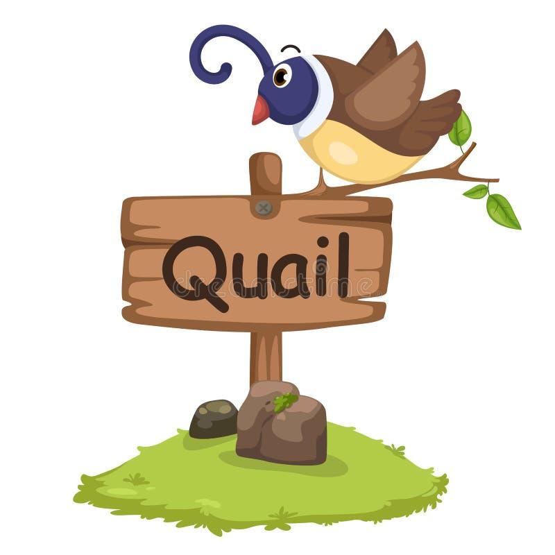 Animal alphabet letter Q for quail vector illustration