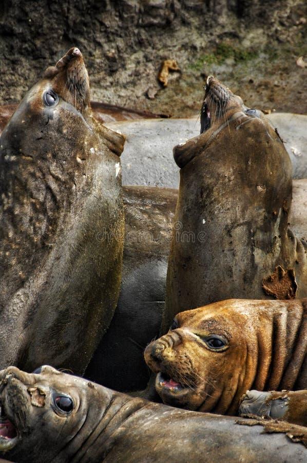 Animal antarctique photographie stock