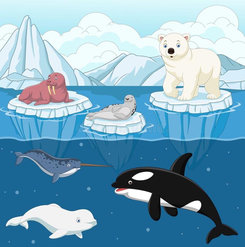 Animal arctique sauvage de bande dessinée sur le Pôle Nord illustration de vecteur