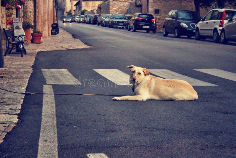 Animal, Asphalt, Blur stock photos
