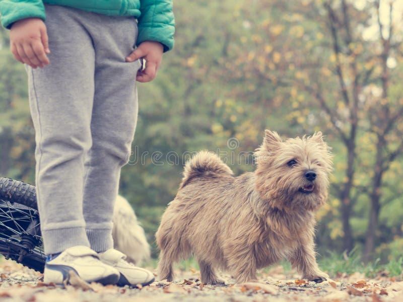 Animal, Autumn, Boy royalty free stock photography