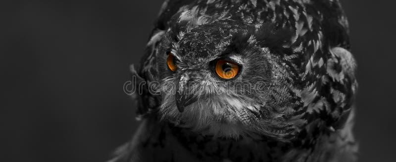 Animal, Avian, Beak stock photography
